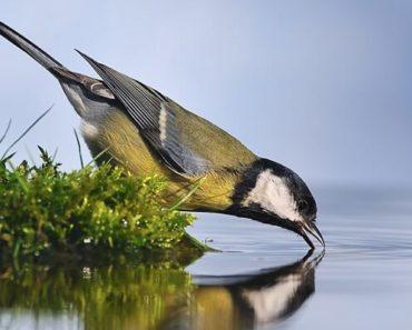 Água para Pássaros Beberem