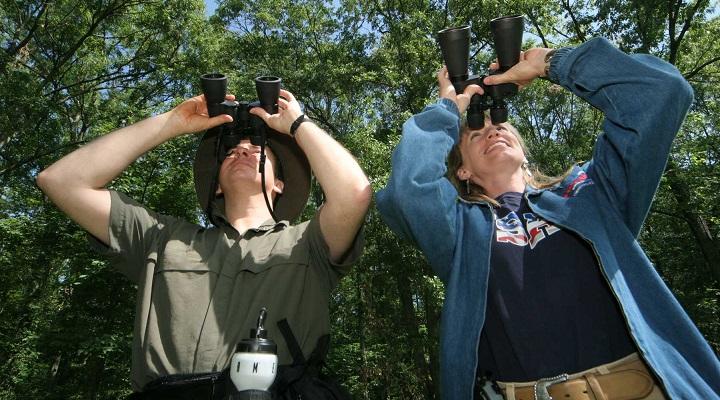 Birdwatching - Observacao de Passaros Brasileiros