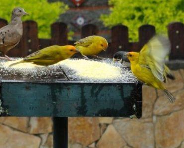 Dicas para Atrair Pássaros para Jardins e Quintais