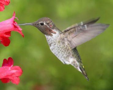 Plantas que Atraem Pássaros