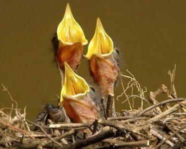 Qual o Melhor Alimento Para os Pássaros