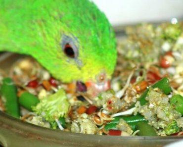 Top 10 Alimentos Saborosos e Nutritivos Para Seu Pássaro