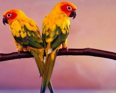 Top 10 Alimentos que Podem Matar seu Pássaro