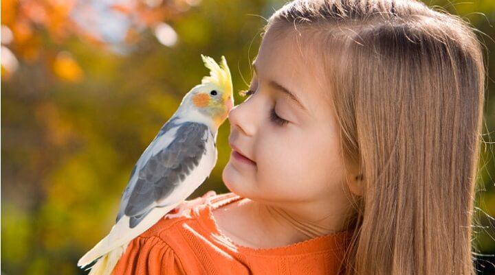 Top 3 Melhores Passaros Para Criancas