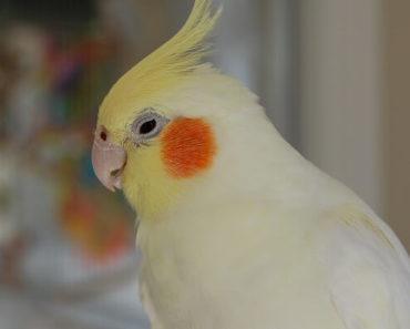 Você Deve Cortar as Penas das Asas Dos Seus Pássaros