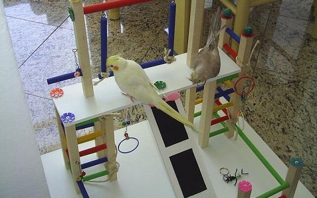 playground para calopsitas
