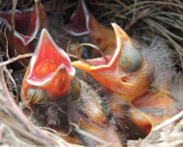 Dicas Para Preparar Pássaro para a Reprodução